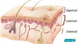 Opbouw van de huid